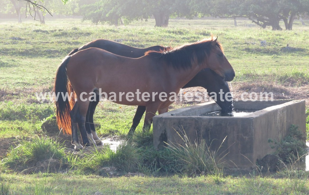 horsebackriding just a few meters away from your luxury villa
